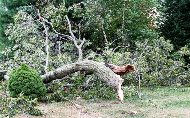 STAAB TREE SERVICE STORM DAMAGE CLEAN UP IMAGE