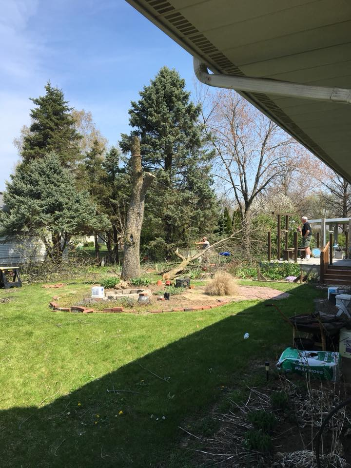 STAAB TREE SERVICE TREE REMOVAL IN BACK YARD