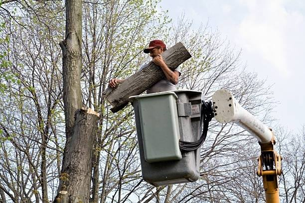 STAAB TREE SERVICE TREE TRIMMING IMAGE